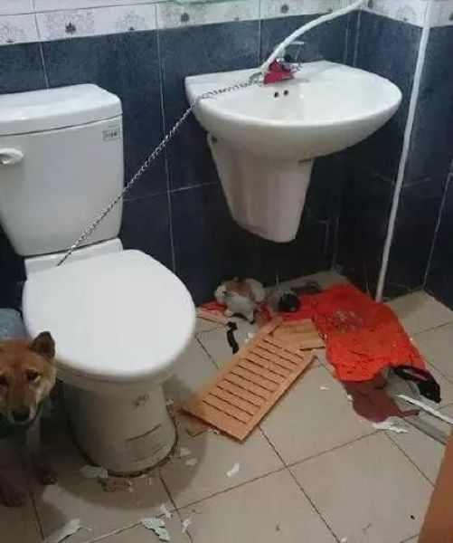 Собака, запертая в туалете (3 фото)