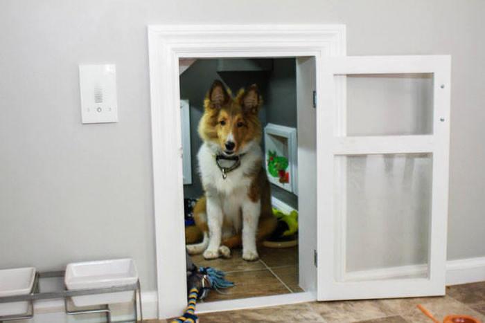 Оригинальный собачий домик (11 фото)