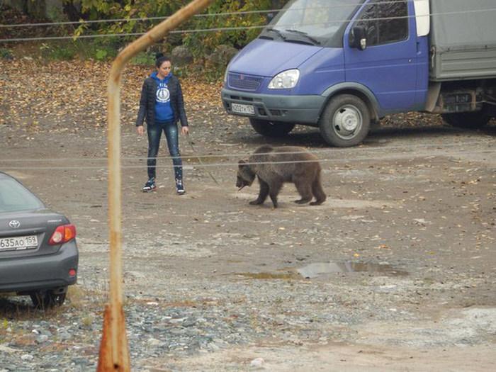 В Перми девушка выгуливала медведя на поводке (4 фото)