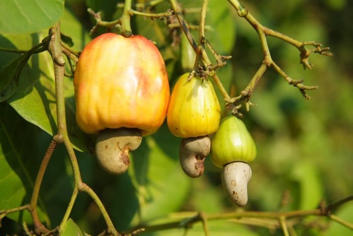 Почему не стоит пробовать плоды неизвестных растений (5 фото)