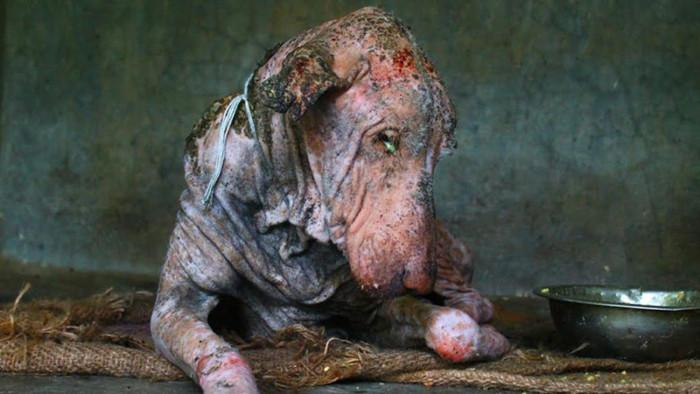 Удивительная история спасения несчастной собаки (7 фото)