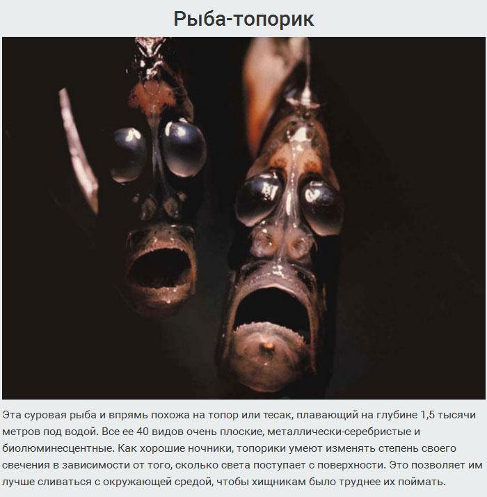 10-ка самых странных обитателей Марианского желоба (10 фото)