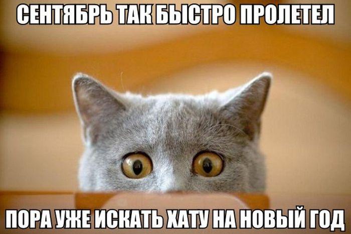 http://trinixy.ru/pics5/20151001/podborka_vecher_14.jpg
