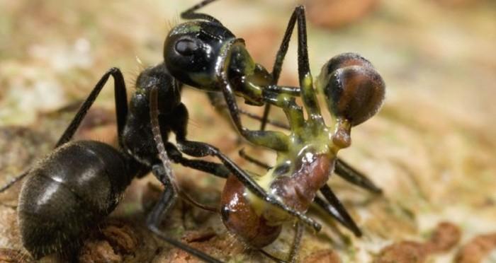 Самые необычные способы защиты от врагов в животном мире (10 фото)