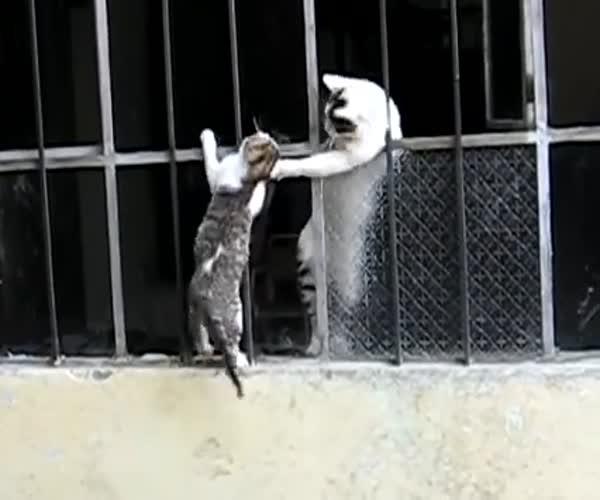 Мама пришла на помощь котенку