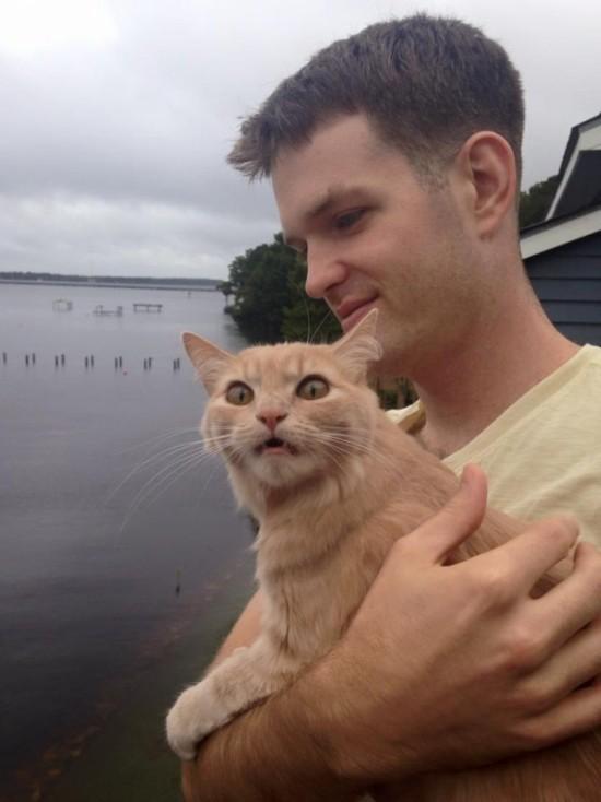 Эмоции кота, впервые оказавшегося на улице (4 фото)