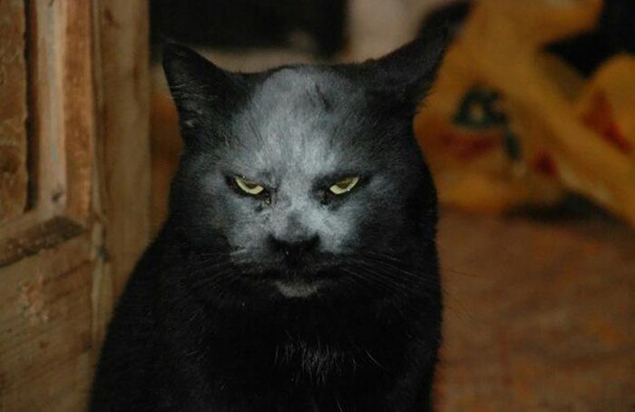 Просто черный кот в муке (3 фото)