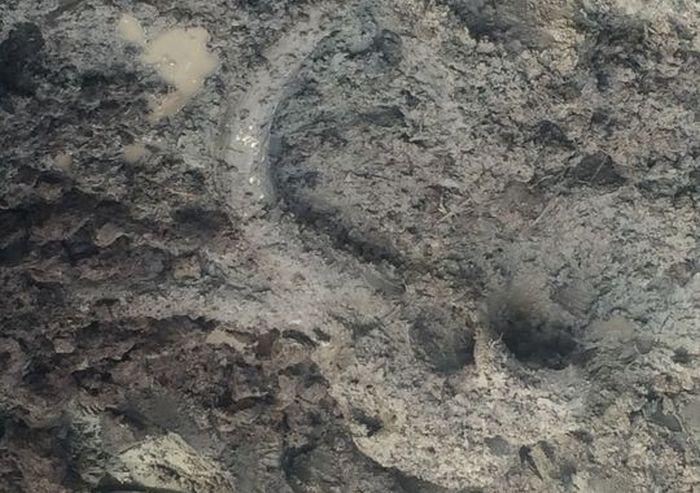 Американский фермер обнаружил останки мамонта на своем поле (10 фото)