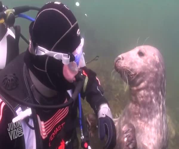 Дайвер играет с тюленем