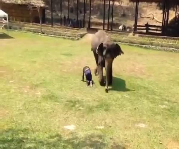 Слон спешит на помощь