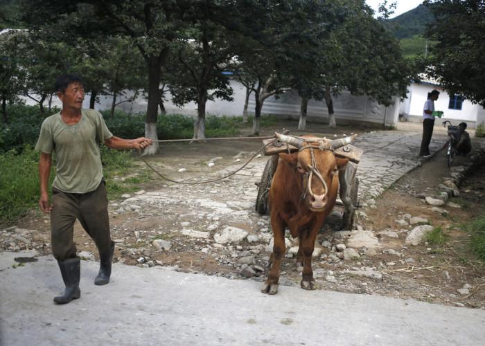 Повседневная жизнь в Северной Корее (76 фото)