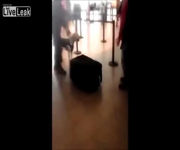 Собака обнаружила нелегального мигранта