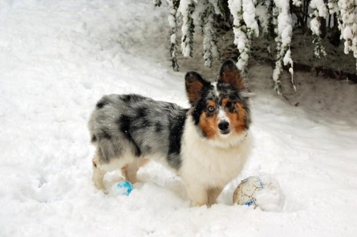 Самые очаровательные псы-метисы (20 фото)