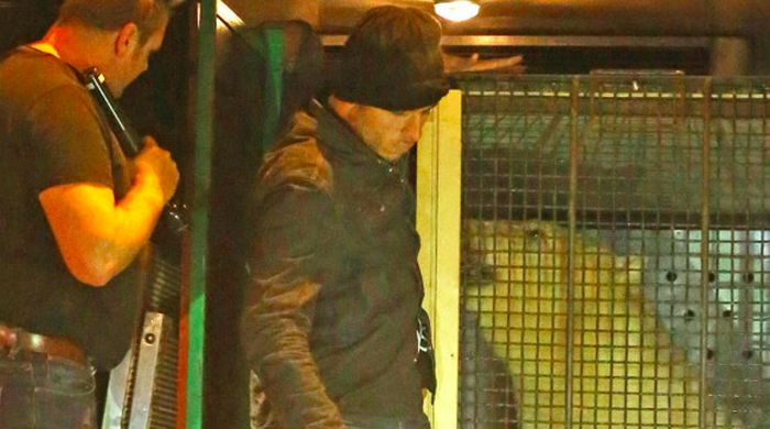 Нелегалы пытались попасть в Великобританию в одном грузовике с русским медведем (2 фото)