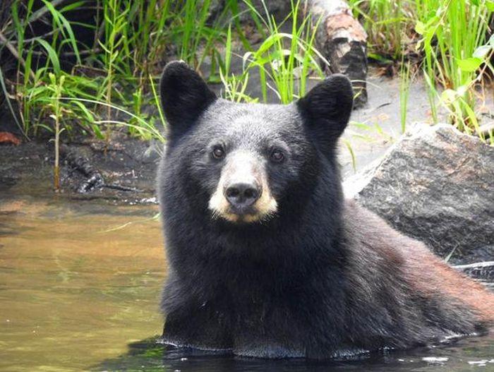 Из-за попыток сделать селфи с медведем туристам запретили посещение каньона в Денвере (9 фото)
