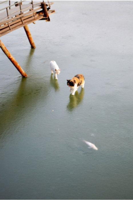Лед ввел котов в полнейшее замешательство (10 фото)