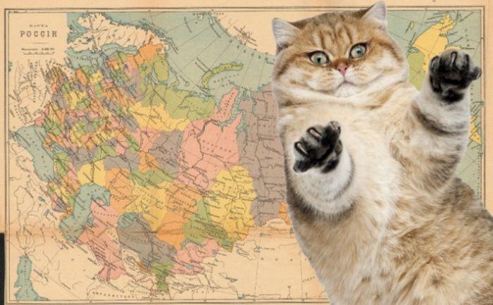История Росси в забавных гифках с котиками (25 гифок)