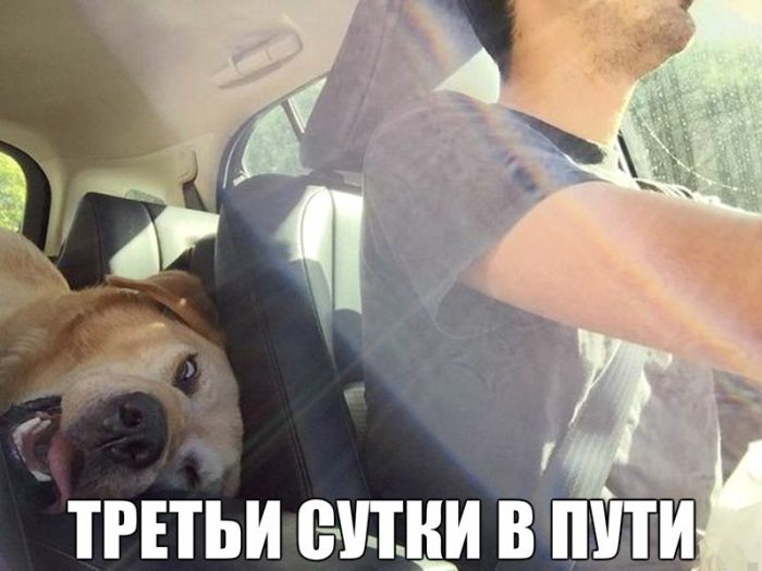 Авто приколы (46 фото)