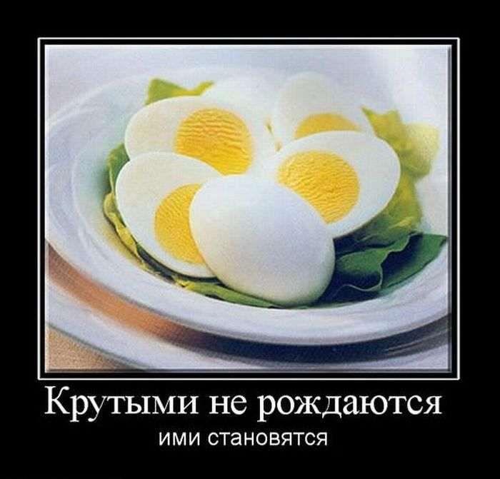 http://cdn.trinixy.ru/pics5/20151022/demotivatory_14.jpg