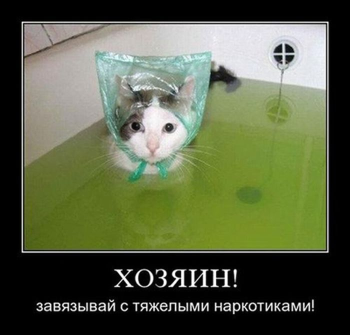 http://cdn.trinixy.ru/pics5/20151022/demotivatory_30.jpg