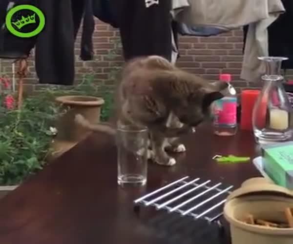 Хозяйка подшутила над котом