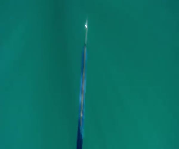 Опасная встреча для любителя подводной охоты