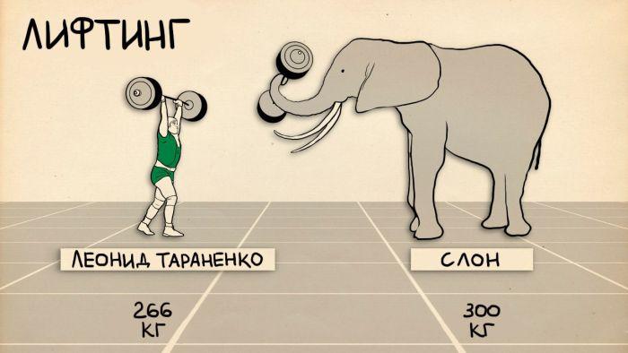Спортсмены в сравнении с животными (4 картинки)
