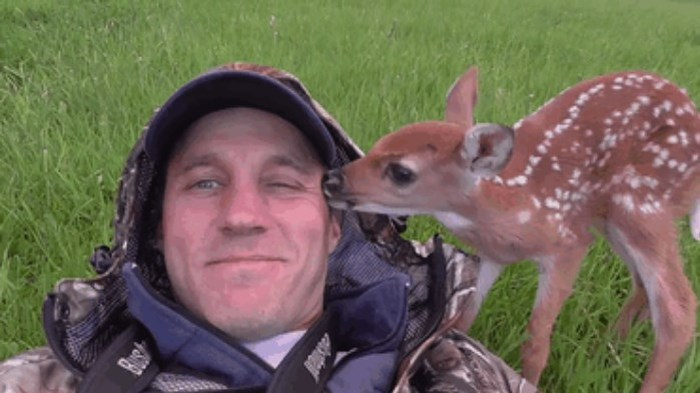 История спасения одного олененка (9 фото + видео)