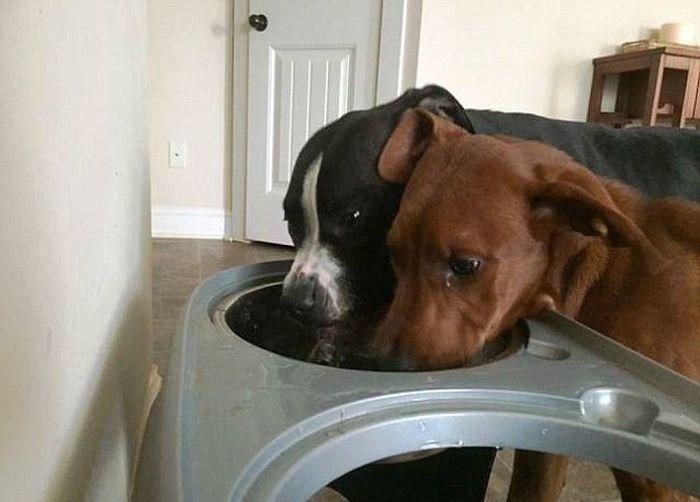 Собачья дружба со счастливым концом (4 фото)