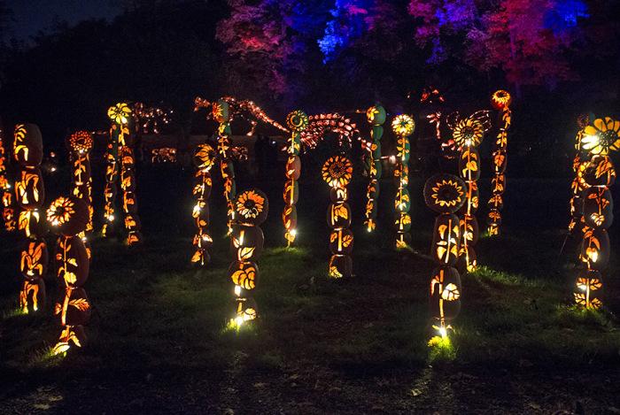 Тысячи тыкв-светильников на выставке Great Jack O' Lantern Blaze (17 фото)