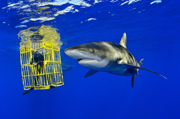 Редкие обитатели морей на фото Брайана Скерри (10 фото)