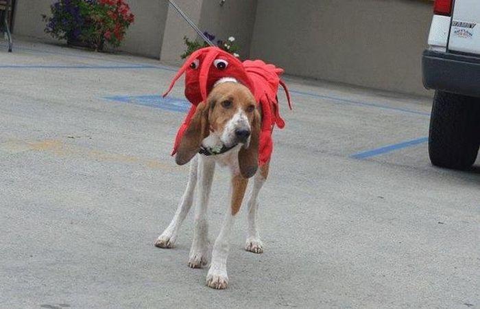 История спасения одной собаки (17 фото)