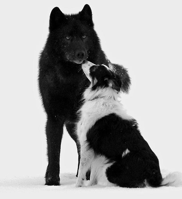 История невероятной дружбы (9 фото)