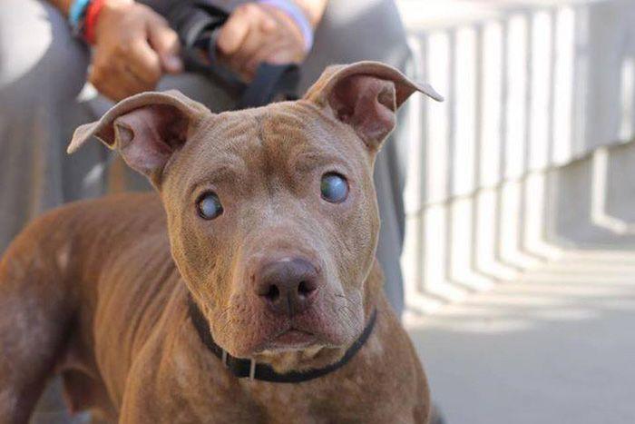 Брошенная слепая собака получила необходимую помощь (6 фото)
