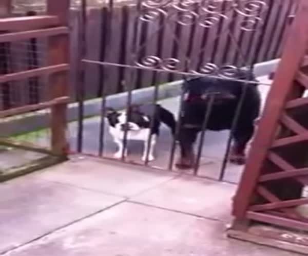 «Говорящий» пес