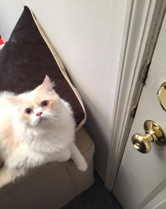 Кот, которого не так просто оставить одного дома (3 фото)