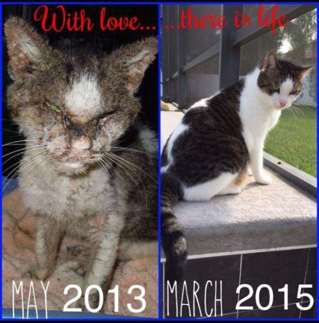 Подборка фотографий спасенных кошек (20 фото)