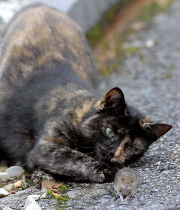 Кот поиграл с пойманной им мышью и отпустил ее (14 фото)