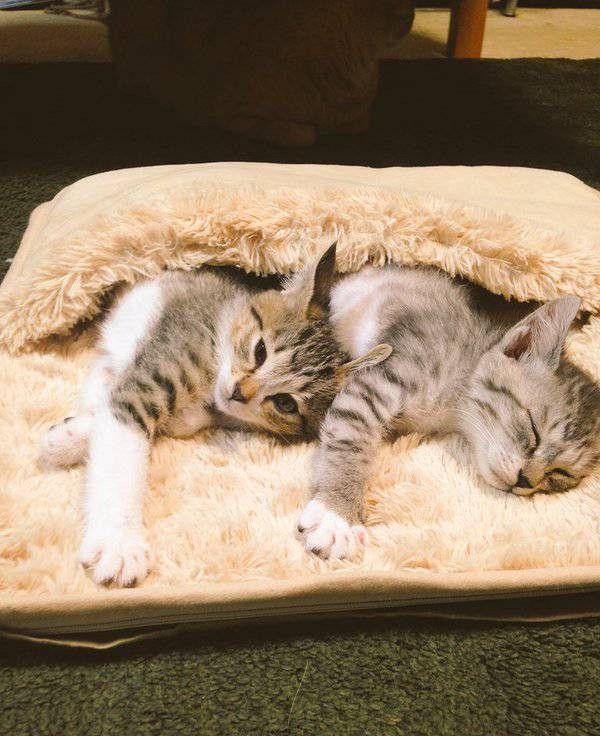 Коты отобрали хозяйскую грелку для ног (5 фото)