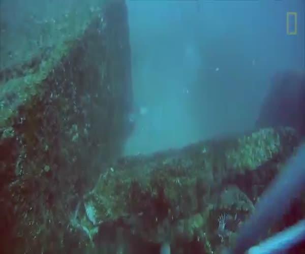 Хищная рыба попыталась отобрать добычу дайвера