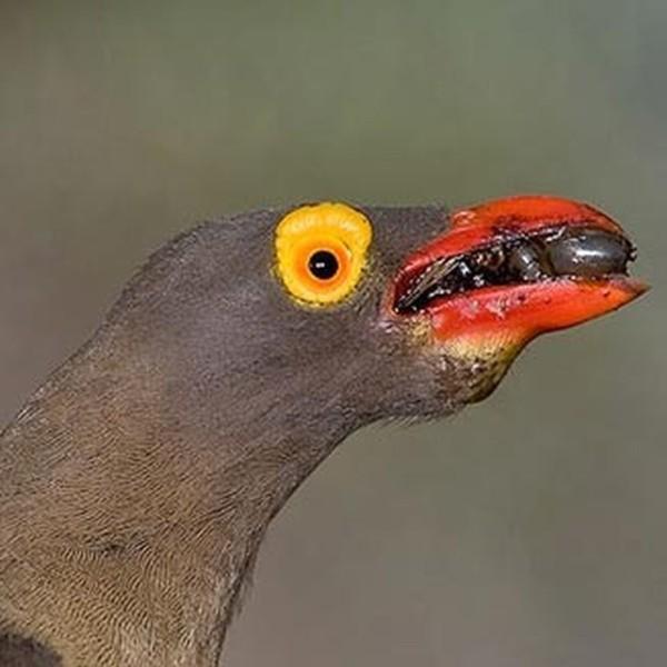 знакомство с голосами птиц на экскур