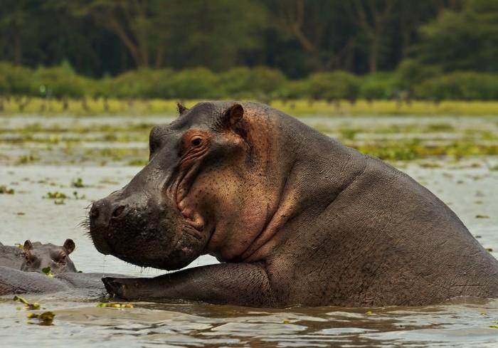 Животные, которых могут не застать наши дети (10 фото)