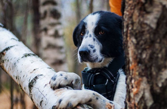 История спасения одной собаки (5 фото)