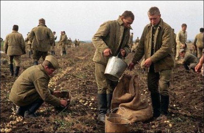 Как и чем питались граждане СССР (26 фото)
