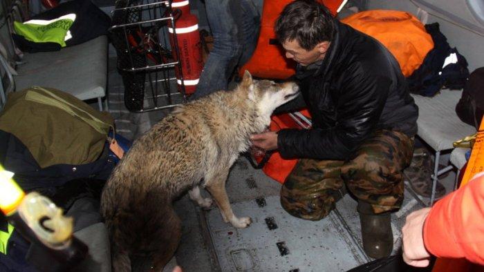 Архангельские спасатели спасли охотника и его собаку, которых унесло в открытое море (3 фото)