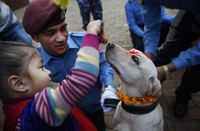Кукур Тихар - непальский праздник почитания собак (9 фото)