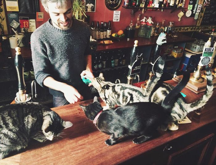 Кошачий паб в Бристоле (8 фото)