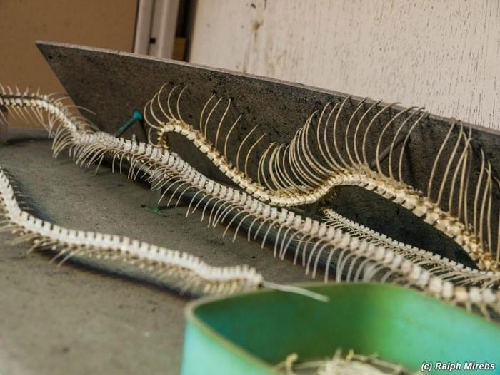 Комната мёртвых змей в Японии (34 фото)