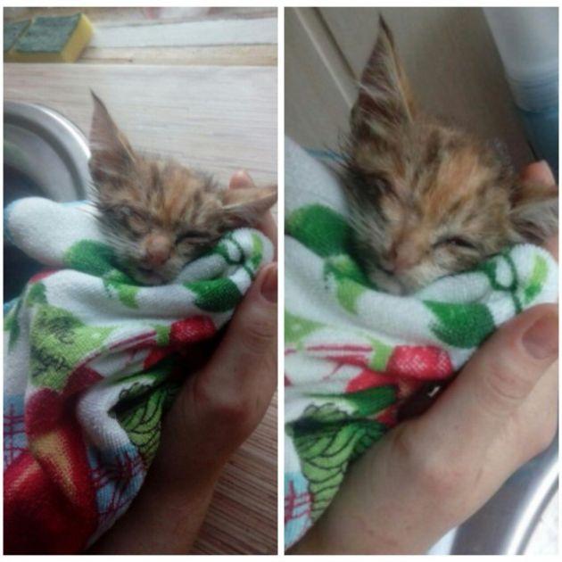 История спасения одного котенка (5 фото)