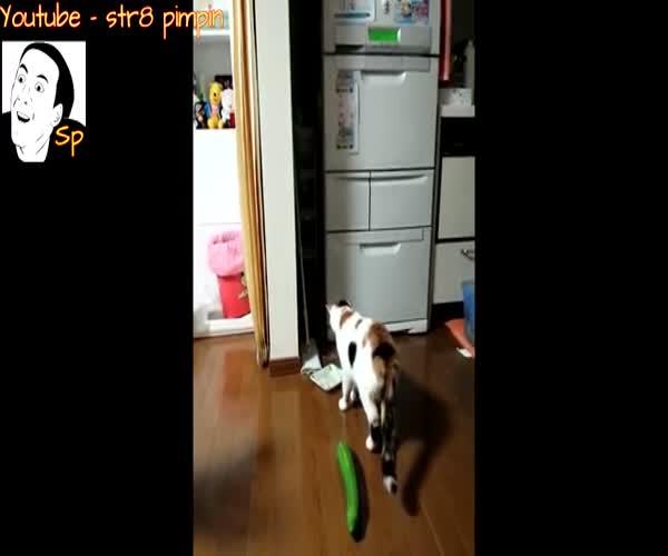Кошки пугаются огурцов